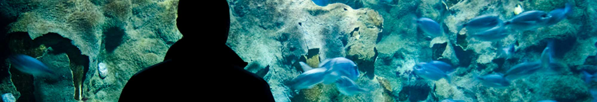 Hotel + Entradas al Aquarium Donostia-San Sebastián