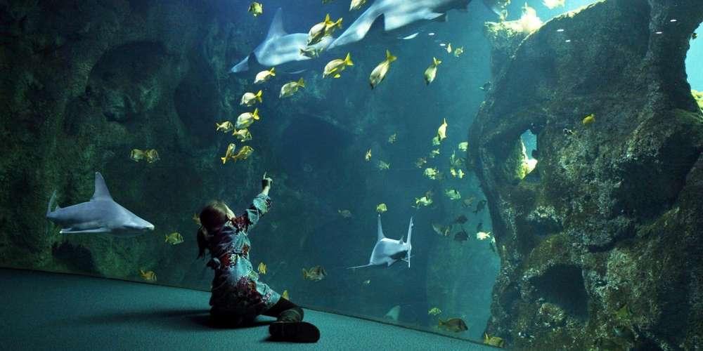 Aquarium de La Rochelle + Audioguide